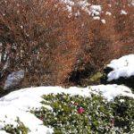 都心にも3~4センチの雪が積もりました。— 2008.02.04—