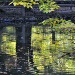 和田堀の秋色(08.11.下旬)–温暖化で大変遅れてはいるが・・