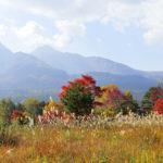 裏磐梯の秋色—カシラダカ&アオゲラ   —-09.10.22~23—