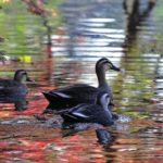 池は晩秋の光に満ちて・・・・—09.12.9—