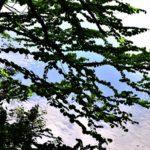 初夏の鴫の谷地沼のほとり(特集)③—10.6..5—