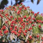 護岸のカワセミと木の実と花たち       —10.10.6—