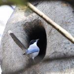 2011年最後の日の野鳥撮影散歩の成果物—2011.12.31—