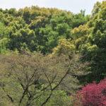 大宮公園、和田堀界隈の春は本番!—11.4.20—