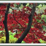 近場で秋色万感!!—2011.12.7&8—