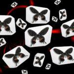 b-butterfly……観てきました。ブータンシボリアゲハ(♂)—12.2.21—