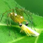昆虫や蛾や蝶は野鳥の餌ーーさはさりとて、その美しき生態—12.6.20—