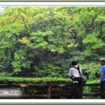 晴れ時々豪雨の瓢箪池   —12.8.19—