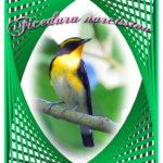編み目枠デザインの中の愛鳥   —13.10.16—