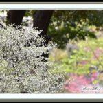 春の和田堀の景色 —14.4.12—