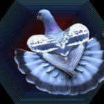 ドバトの羽のばし  —14.10.6—