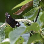 鳥の餌となる昆虫たち       —15.6.6—