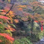 高野山2015年秋の紅葉風景    —2015.11.10~14—