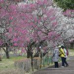 梅の花と小鳥――府中の森に観梅に・・・     —'16.2.25—