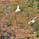 上野の不忍池の秋 —2016.11.14—