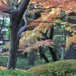 今秋の太田黒公園      —2016.12.2—