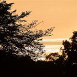夕焼け (Sunset)    —2017.9.15—