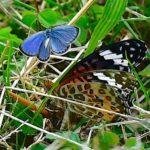 初秋の蝶たち       —2017.10.6—