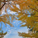 秋空と黄葉     —2017.11.1—