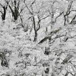 樹氷     —2017.11.29—