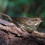 水元公園の野鳥たち  — 2018.11.30—