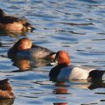 海辺の野鳥たち    —2018.11.1—