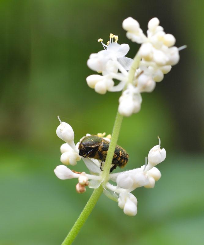 夏、森の花に来る蝶と虫たち