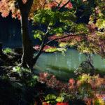 新宿御苑の秋
