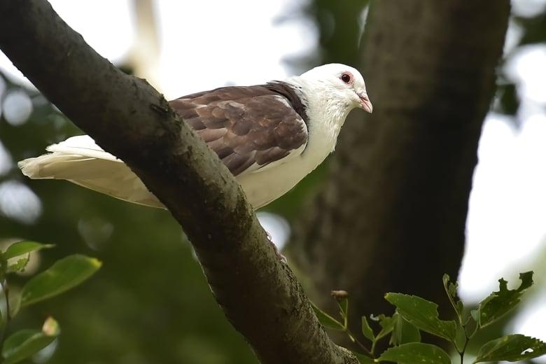 珍鳥ー超珍鳥かと思いきやドバトの・・・・   —14.9.17—