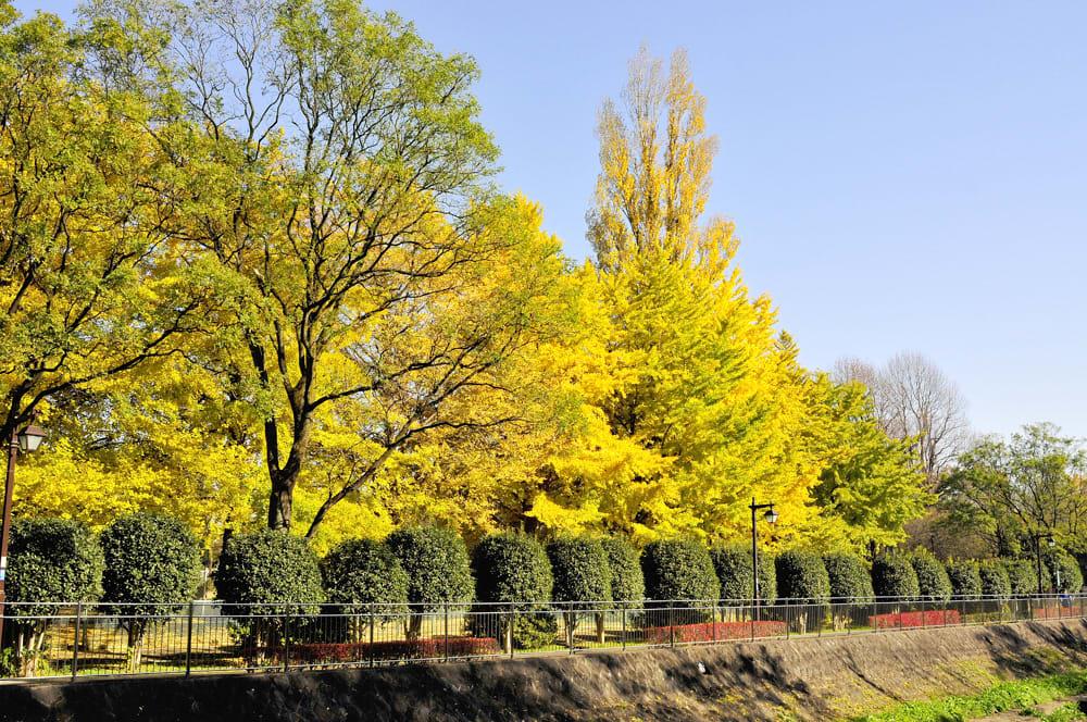 久しぶりに和田堀に行きました。(08.12.3)