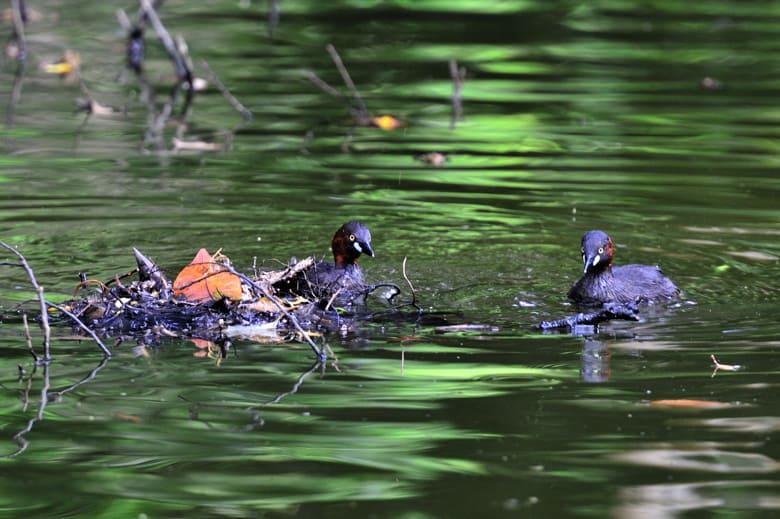 暑さを避けて、今日も池に・・・・・—12.7.18—
