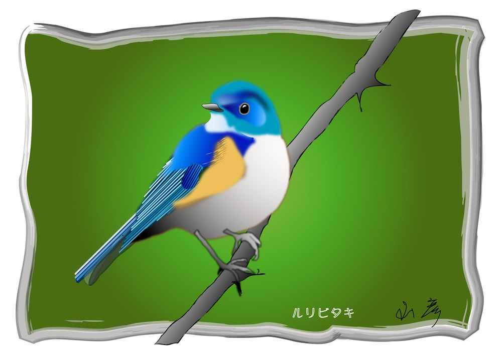 連日の猛暑。・・・・で、ルリビタキの成鳥を描くことにしました。—10.8.5—