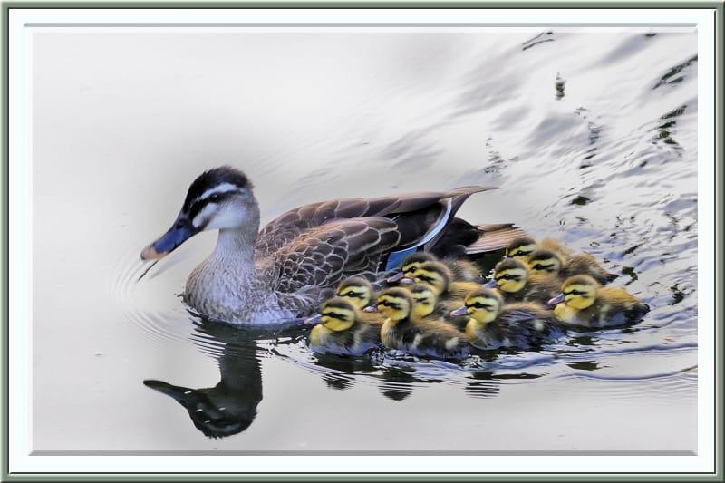第62回杉並区総合文化祭写真展公募の作品が入選   —2012.9.14—