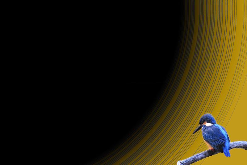 カワセミ、ルリビタキ、オオルリ、キバラガラ、ツメナガセキレイ、ギンムクドリの壁紙—11.8.25—