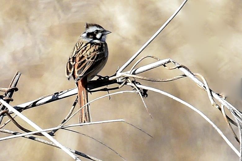 黒川両岸の小鳥達      —'16.2.23—