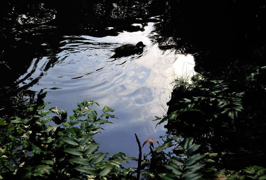 朝夕の池面のシルエット 09.10.16