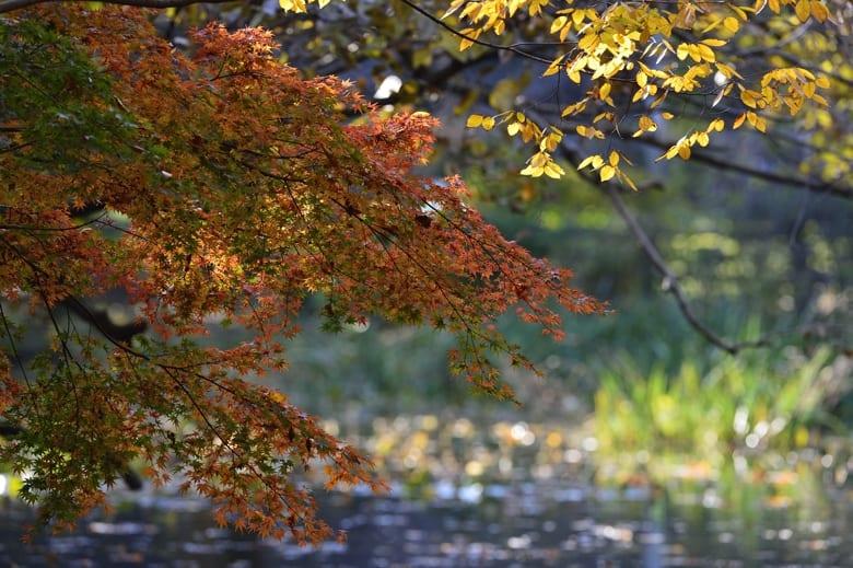 秋色⑤   池の畔と善福寺川界隈   —13.11.24—