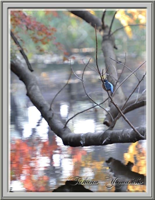 和田堀公園の秋真っ盛り   —13.12.8—