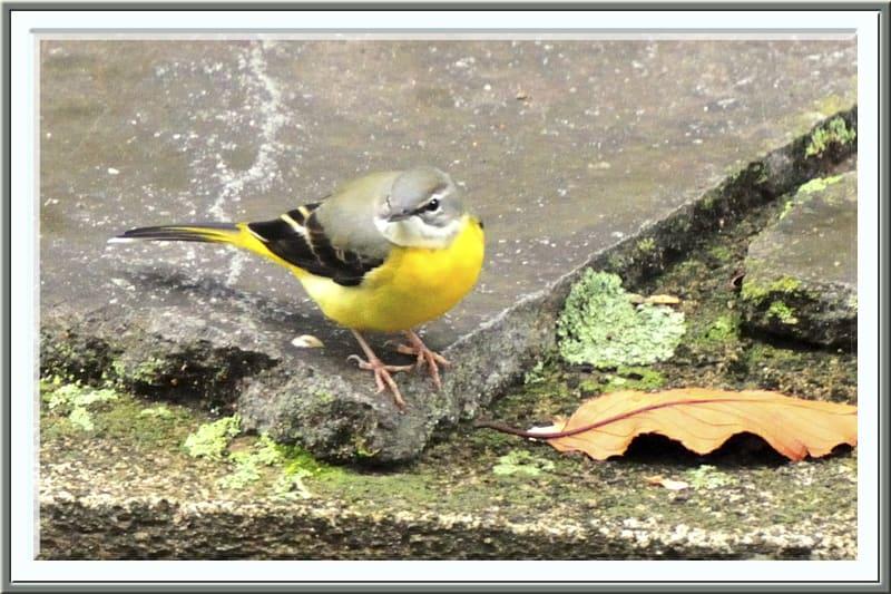 野鳥を意識した川沿いの散歩—11.11.8—