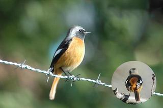 我家の窓から撮影させてくれた鳥たち