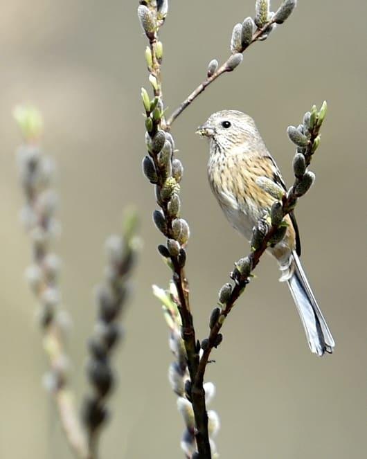 今日の北本自然観察公園の小鳥達      —24.3.23—