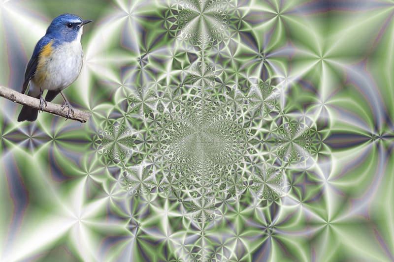 野鳥ルリビタキとComputer Graphic    —14.3.19—