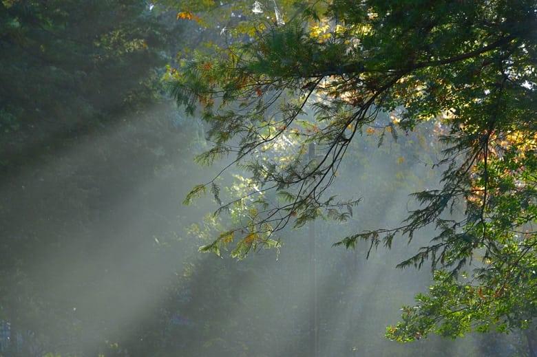 朝の光   —15.11.27—