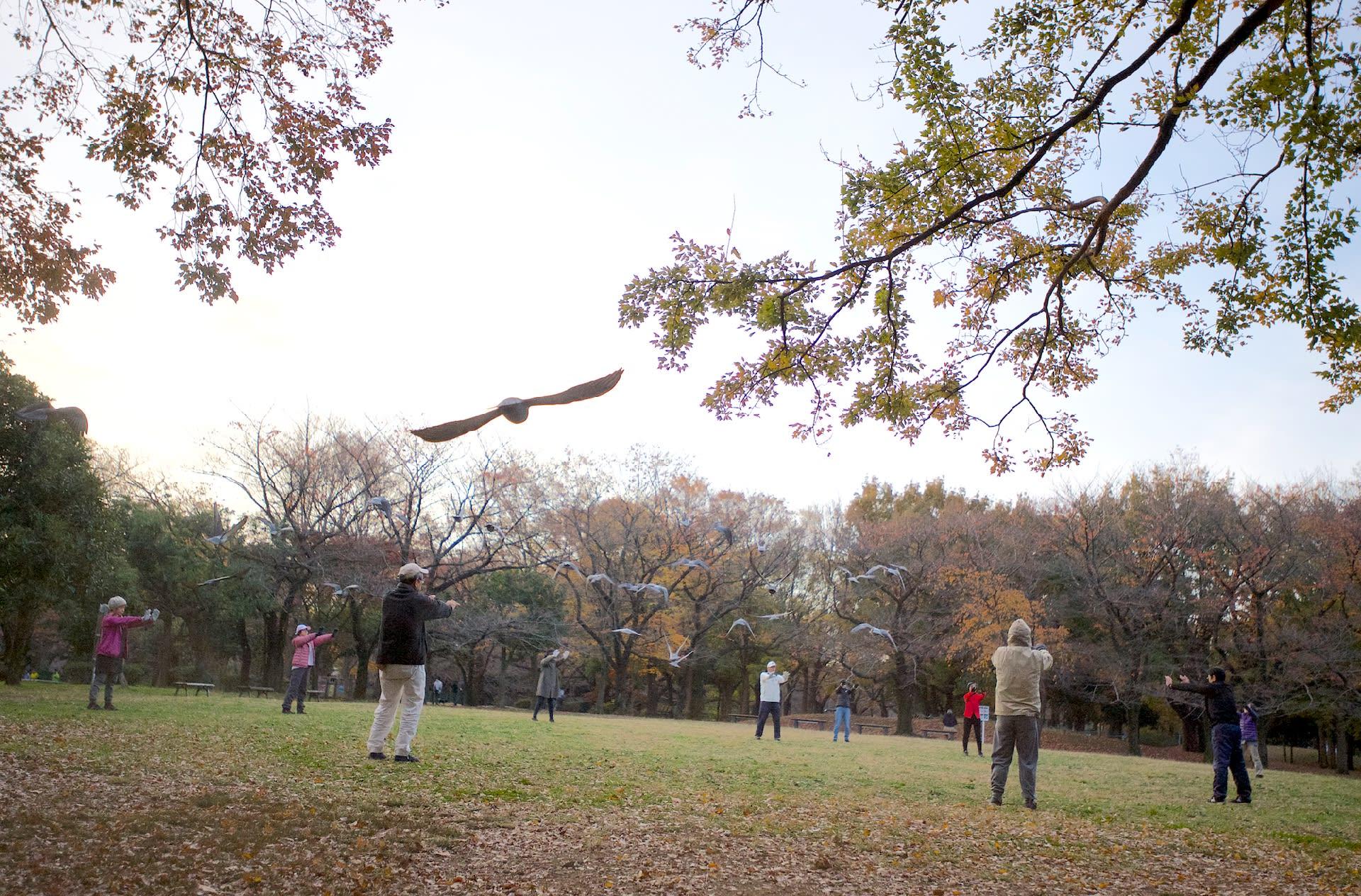 今朝の善福寺川界隈-人と野鳥のコラボで心身の健康を目指す「気功」   —2018.11.23—