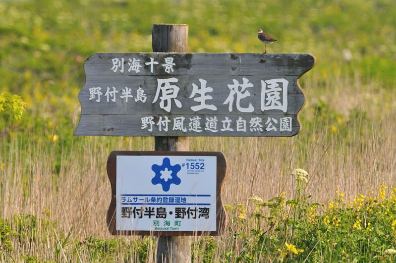 ⑦北海道第7日目 野付原生花園へ(アカアシシギ、タンチョウツル、カッコウ、ほか)–09-07-04–