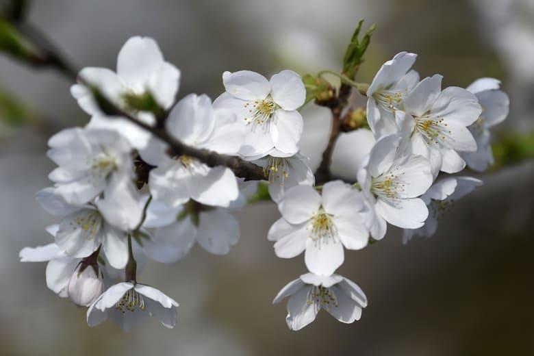 今日の善福寺川界隈      —14.3.31—
