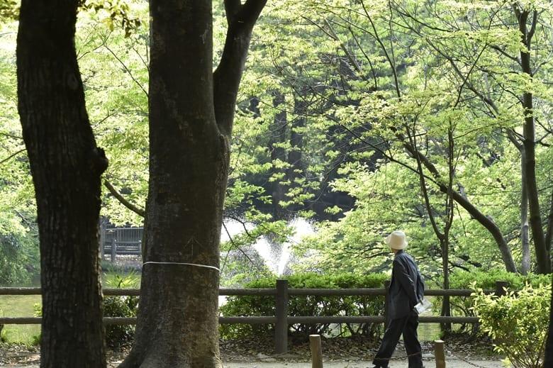 森の春―新緑といつもの小鳥達       —14.4.25—