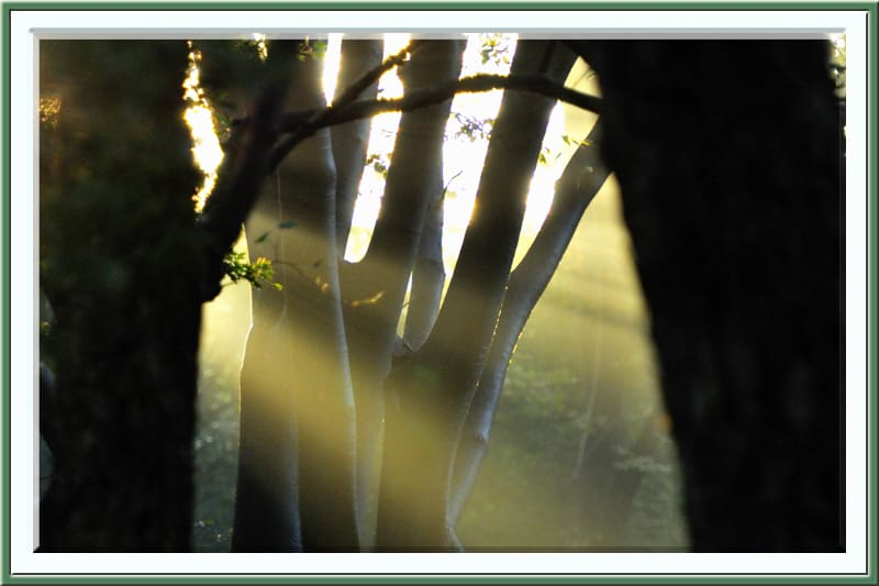 雨の翌朝は旭が杜に差し込み地表の水蒸気の立ち上りがきれい。—11.11.12—