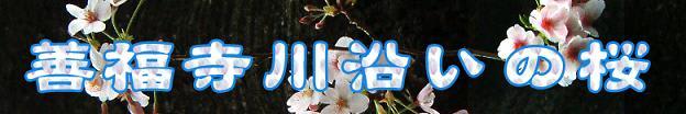 桜花 年毎の色 違いけり(1)