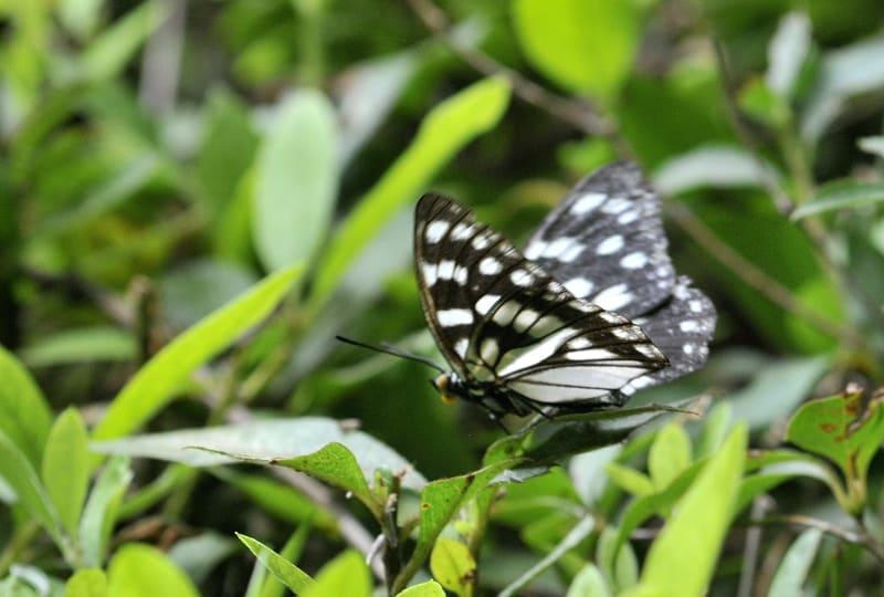 久方ぶりに和田堀に行ってきました。ゴマダラ蝶やコシアキトンボがたくさん飛んでいました。